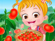بيبي هازل زراعة الطماطم